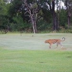Fünf Golfplätze die Euch töten können – Teil 2/2